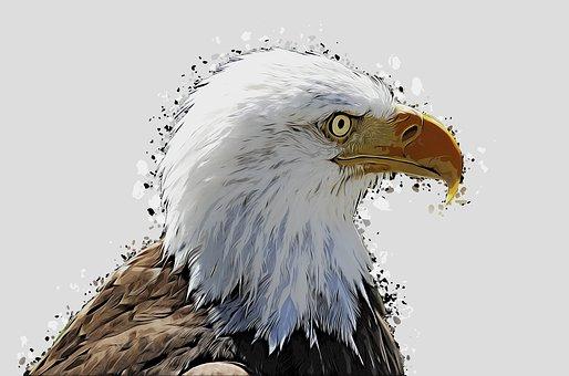 Bald Eagles, Bird, Cartoon, Animal, Bill, Bird Of Prey