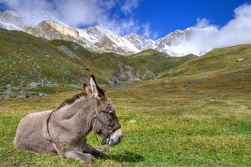 Donkey, Mountain, Alps, Equine, Animals, Trekking