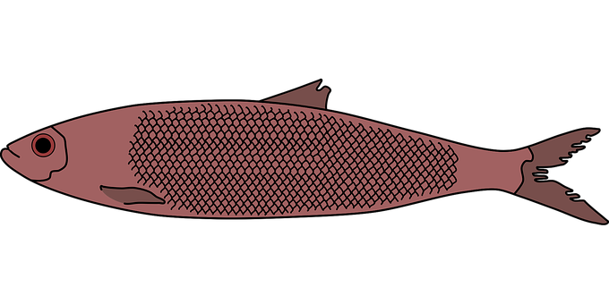 Herring, Fish, Red Fish