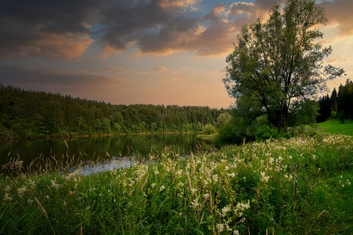 Lake, Tree, Water, Grass, Mirroring, Meadow, Forest