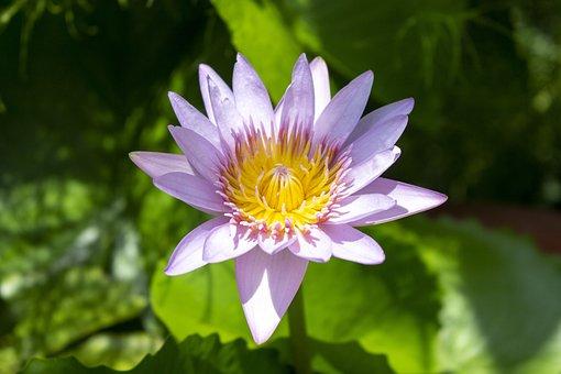 Lily, Plant, Leaf, Green, Garden, Background, Flower