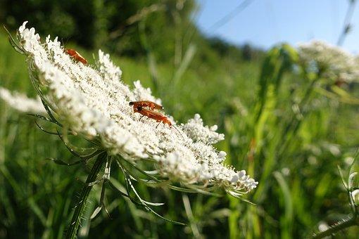 Beetle, Bug, Bugs, Ladybug, Insect, Nature, Animals