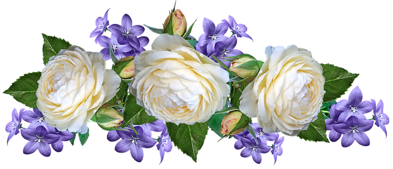 Flowers, White, Roses, Blue, Blooms, Cut Out, Isolated