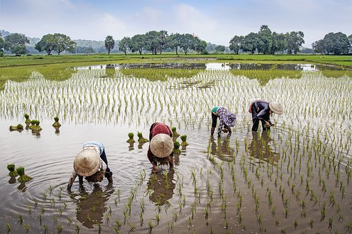 Field, Farmer, Rural, Water, Vietnam, Landscape