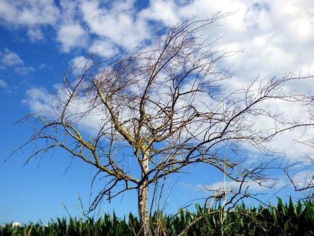 Tree, Sky, Nature, Blue, Cloud, White, Landscape