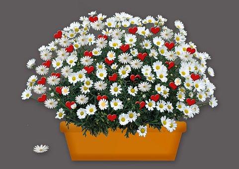 Marga Renon, Heart, Plant, Flower, Flowerpot, Romantic