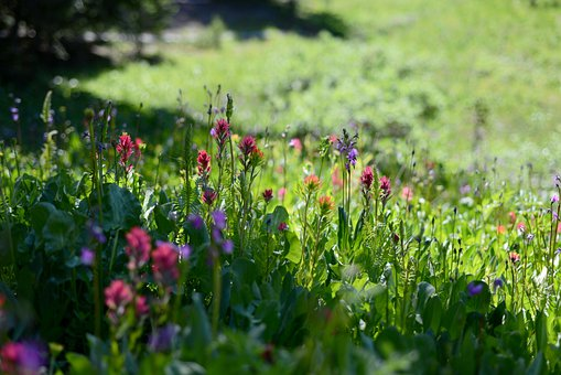 Wildflowers, Pink, Nature, Blossom, Summer, Meadow