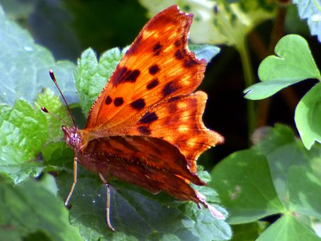 Butterfly, Insect, Orange, Nature, Flower, Summer