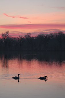 Sunset, Swans, Lake, Abendstimmung, Beautiful, Nature