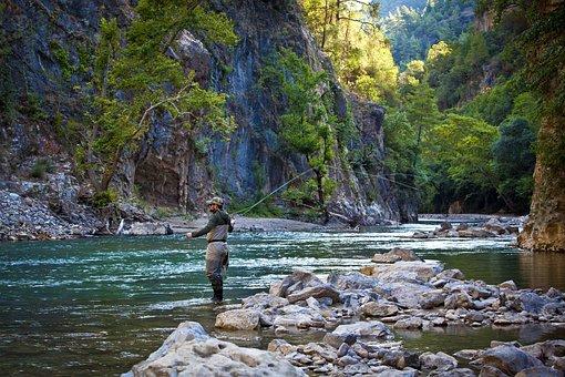 Fish, Fisherman, Water, Angler, Nature, Fishing Rod
