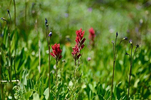 Wildflowers, Pink, Nature, Blossom, Flowers, Summer