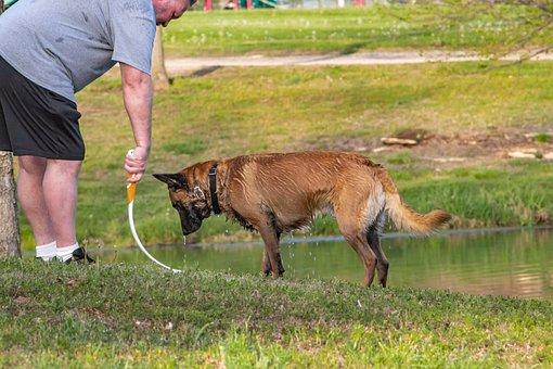 Dog, Pet, Leash, Play, Game, Grass
