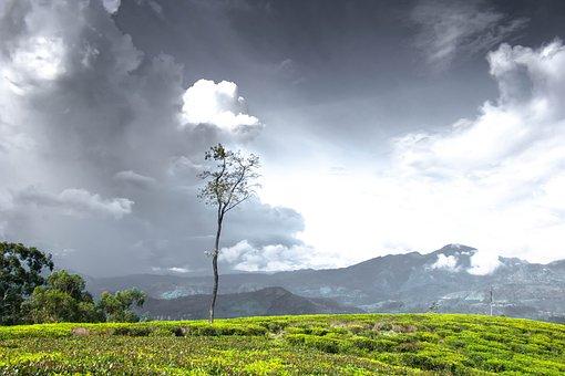 Tree, Alone, Sky, Lonely, Landscape, Scenery