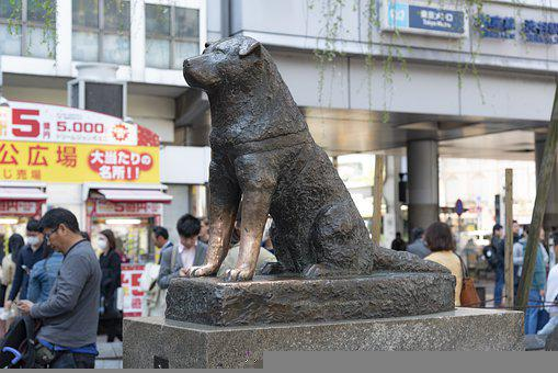 Japan, Hachikō, Dog, Street, Tokyo, Homeless, City