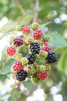 Blackberries, Fruit, Food, Tasty, Summer