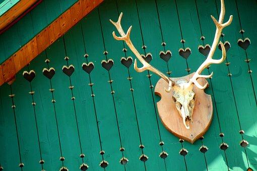 Skull, Horns, Hunting, Trophy, Bone, Animal, Cowboy