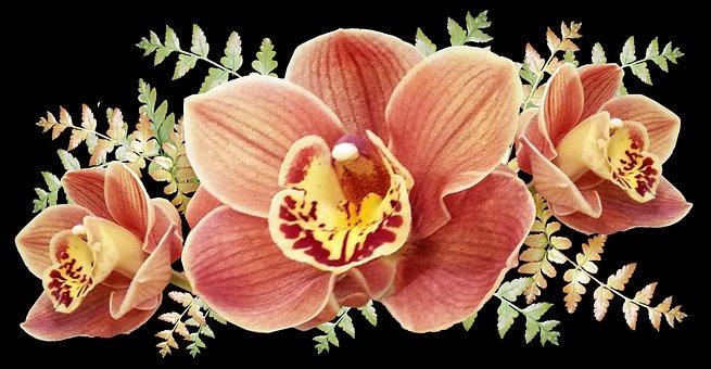 Flowers, Orchids, Exotic, Tropical, Arrangement, Plants