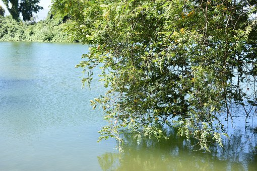 Water, Lake, Plant, Tree, Nature, Landscape, Calm