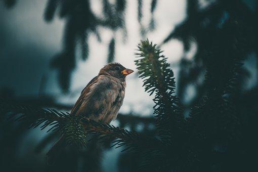 Bird, Bird Photography, Sparrow