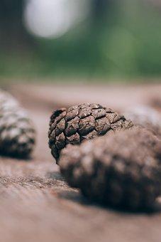 Acorn, Wood, Tree, Brown