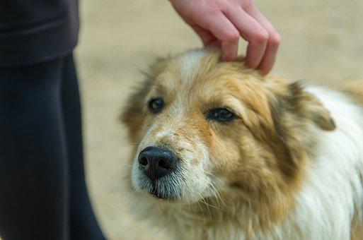 Dog, Pet, Animal, Canine, Fur, Calm, Homeless