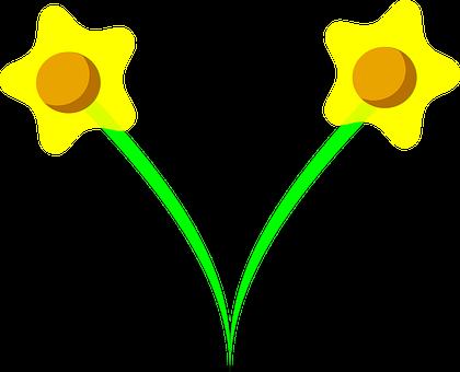 Daffodil, Narcissus, Bulbous Perennials, Flower, Plant
