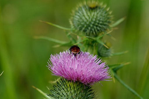 Insect, Bug, Flower, Petals, Spines, Green, Leaves