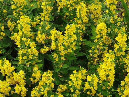 Flowers, Meadow, Yellow, Plants, Garden, Flora, Botany