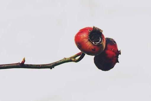 Hawthorn, Plant, Bush, Nature, Autumn, Close Up, Lonely