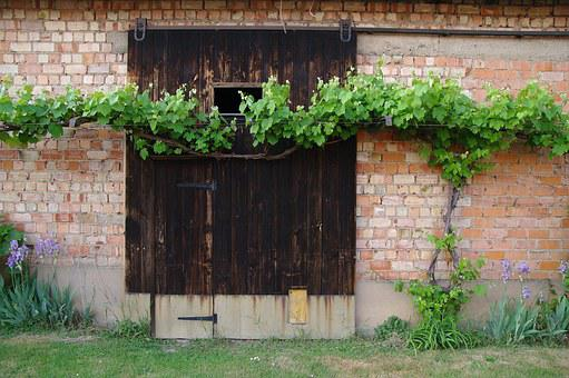 Vine, Barn Door, Red Brick Wall, Door, Wood, Brick Wall