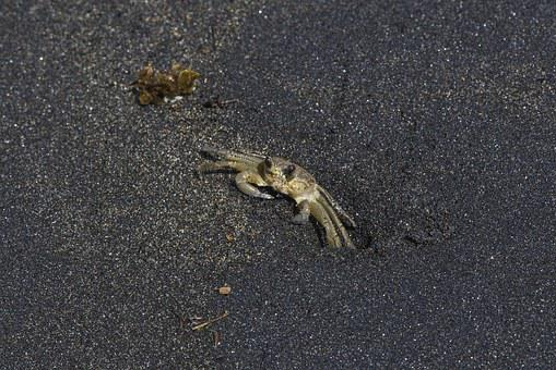 Beach, Sand, Black, Dark, Crab, Animal, Sea, Ocean
