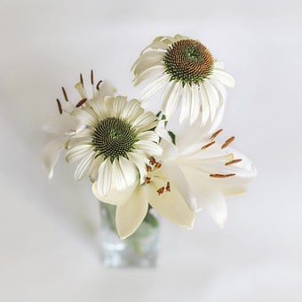Lily, Coneflower, Garden, Flower, Daisy, Blossom