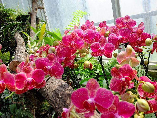 Flower, Wuhan Botanical Garden, Still Life