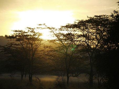 Acacia Wood, Morgenstimmung, Uganda, Ground Fog