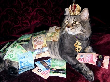 Money, Cat, Wealth, Canadian Money, Naked Man