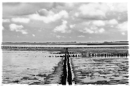 Wadden Sea, Water, Beach, Piles, North Sea, Sea, Ebb