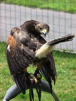 Eagle, Captivity, Prey, Ornithology, Bird, Nature