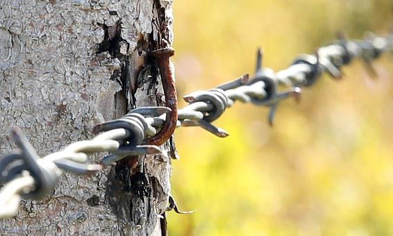 Barbed Wire, Pasture Fence, Barrier, Rod, Pile, Lock Up