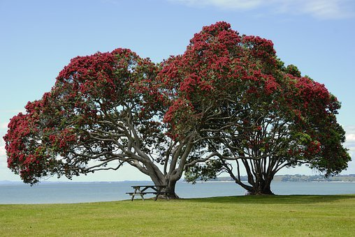 Tree, Blossom, Bloom, Red Flowers, Red, Crown