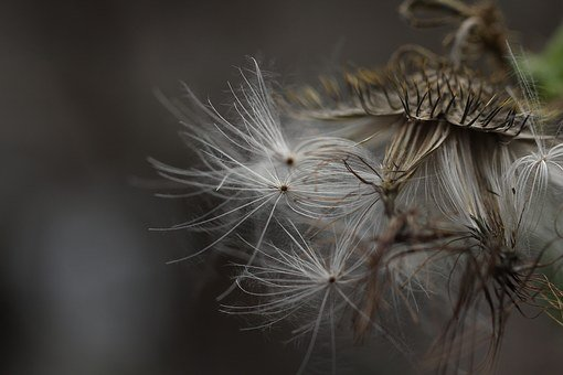 Flower, Smooth, Pattern, Meadow, Ripe, Bud, Grow