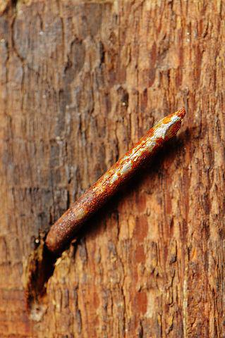 Wood, Rostiger Nail, Stainless, Rusted, Nail, Macro