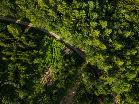 Forest, Trees, Green, Road, Highway, Asphalt, Aerial