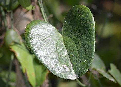 Leaf, Texture, Green, Tree, Branch, Stem