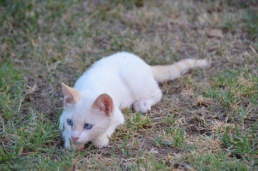 Cat, Kitten, Feline, Eyes, Pet
