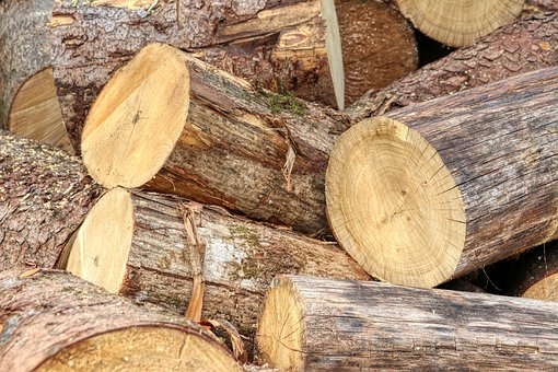 Wood, Log, Tree, Forest, Pile