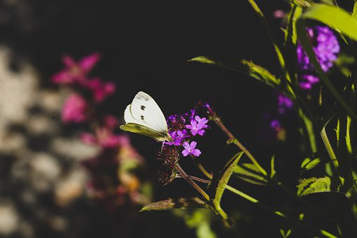 Butterfly, Wings, Insect, Flower, Blossom, Nature