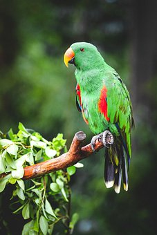 Parrot, Bird, Animal, Green Parrot, Tree, Green