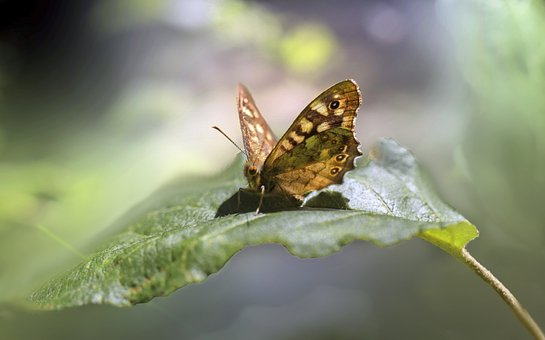Butterfly, Insect, Wing, Nature, Tree, Foliage, Leaf