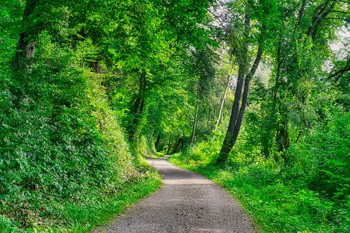 Forest Path, Pathway, Trail, Leaves, Foliage, Grass