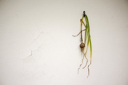 Garlic, Wall, Crack, Leaves, Natural, Organic